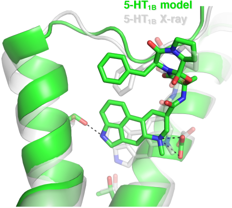The top-ranked model of an anti-migrane drug bound to the Serotonin 1B receptor. The model and experimentally determined structures are shown in green and white, respectively.