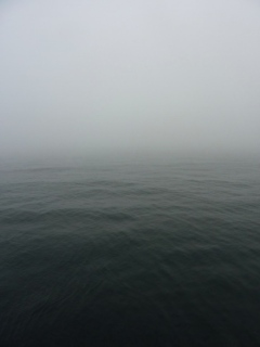 Pic 3. Unusually persistent very thick fog.