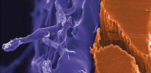 Tape against skin in electron microscopy