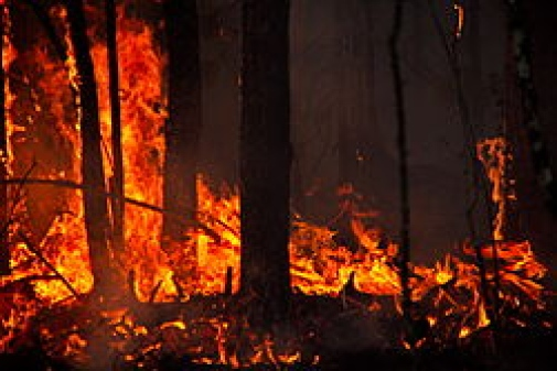 "Extreme weather, such as the forest fires experienced in Västmanland in 2014, are caused by ""blocking events"" , for example a statistically high-pressure that remains stationary and causes heat waves, which can lead to fire. Illustration: Forest fire."